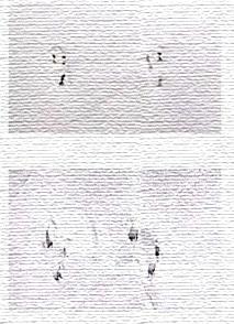 חירורים שונים במסמך אחד